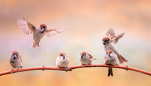 Small Funny Birds And Chicks Sitting On Branches In A Sunny Spring Garden