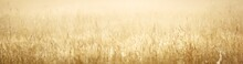 Country Field In A Fog At Sunrise. Plants Close-up. Soft Sunlight, Golden Hour. Idyllic Rural Scene. Texture, Background, Wallpaper. Panoramic Image, Copy Space, Graphic Resources. Nature, Environment