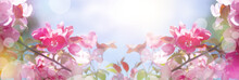 Beautiful Spring Panoramic Banner With Pink Flowers Against The Blue Sky. Branches Of Blossoming Sakura In The Rays Of Sunlight.