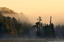 Morning Sunrise In The Foggy Forest