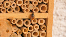 Insect Hotel With The European Orchard Bee