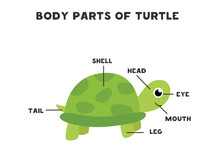 Body Parts Of The Turtle. Scheme For Children.