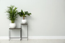 Exotic House Plants On Metal Tables Near Grey Wall. Space For Text