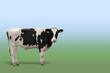 canvas print picture - Portrait einer Kuh, freistehend mit Raum für Text