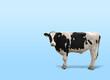 canvas print picture - Portrait einer Kuh, freistehend auf Blauem Hintergrund mit Raum für Text