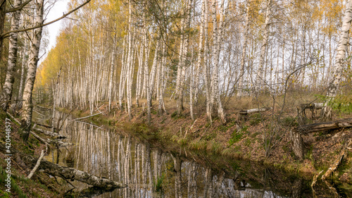 Canvas Print autumn landscape with a bog ditch, colorful trees on the side of the ditch, whit