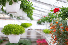 Growing Many Flowers In Greenhouse For Sale