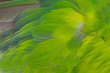 Beautiful Macro Wing Parrot Macaw Feather Pattern  Texture Background