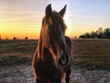 canvas print picture - Sky Sunset Horse