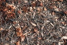Closeup Shot Of Dry Pine Cones, Leaves And Tree Branches On The Ground
