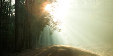 Sun Bursting Through Trees Over A Country Road
