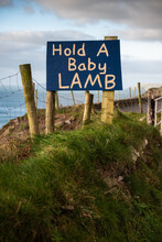 Hold A Baby Lamb Sign In Rural Area
