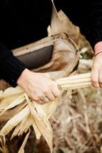 Hands Husking Corn