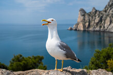 Close-up Portrait Of White Seagull With Wide Open Yellow Beak. The Larus Argentatus Or The European Herring Gull