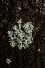 Nature On A Tree Bark