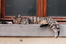 Cat Sleeping In Front Of A Window
