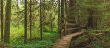 Boardwalk Pathway Through The Woods