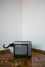 Cat Behind A Vintage Tv Set