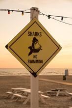Sharks No Swimming