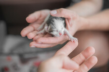 One Day Old Kitten On A Woman's Hand