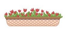 Cartoon Red Tulips In Long Flower Box. Vector Illustration Isolated On White Background.