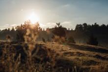 Wonderful Scenery Of A Sunlit Field