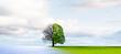 canvas print picture - Jahresezeitenwechsel von Winter zu Sommer