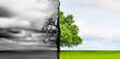 canvas print picture - Klimaveränderung von Karger Landschaft zu Grünem Wachstum