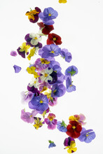 Edible Flowers Background