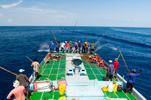 Commercial Fishing, Maldives.