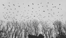 Melancholy Image Of Flock Of Birds Over Empty Streets
