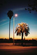 Palm Tree Illuminated By Street Lamp