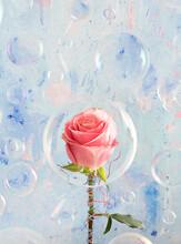 Pink Rose Inside A Soap Bubble