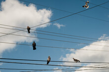 Pigeons Sit On Electric Wires Against Deep Blue Sky