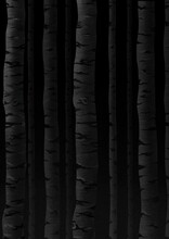 Birch Trees Background. Black And White Illustration