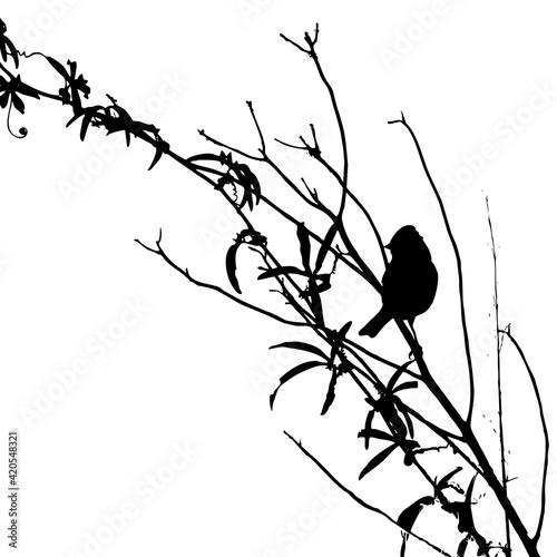 Obraz na plátně pájaro en las ramas