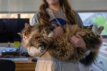 Girl Holding Fluffy Cat