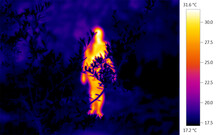 Thermographic Thermal Heat Image Of Naked Nude Human Forms In Nature
