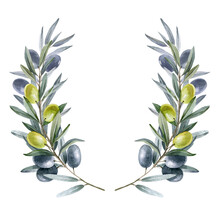 Olive Branches. Plant. Watercolor. The Isolated Object On A White Background.