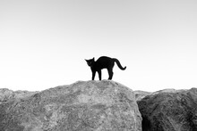 Silhouette Of A Scared Cat