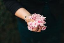 Hand Full Of Pastel Pink Flowers Geranium