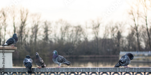 Photo pigeons on the embankment. the pigeons pounced on the food