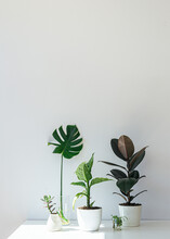 Potted House Plants On White Table