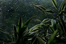 Green Plant And Glass With Rain Drops