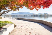 Autumn Trees Next To Lake Burley Griffen. Canberra Australia