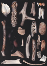 Collection Of Beach Finds, Scan Photography