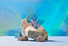 Marine Algae, Sponges And Anemones Growing On A Rock Sea Life Object