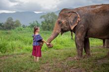 Girl Feeding An Elephant -North Of Chiang Mai, Thailand. A Girl Is Feeding An Elephant In A Sanctuary For Old Elephants.