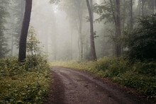 Forest Road With Fog In Fall