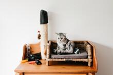 Sweet Little Kitten Sitting On A Closet